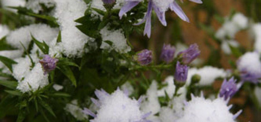 Подготовка к зиме многолетних цветов, деревьев и кустарников