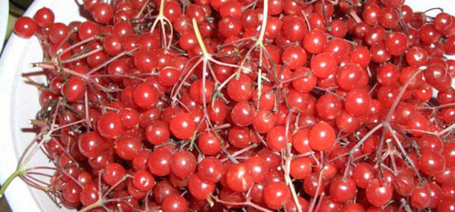 Ликер и настойка ягод калины