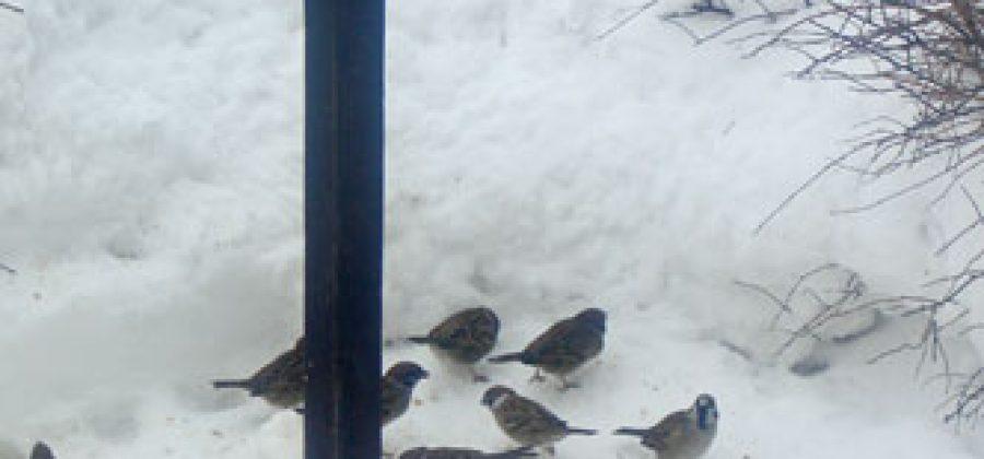 Подкормка птиц зимой