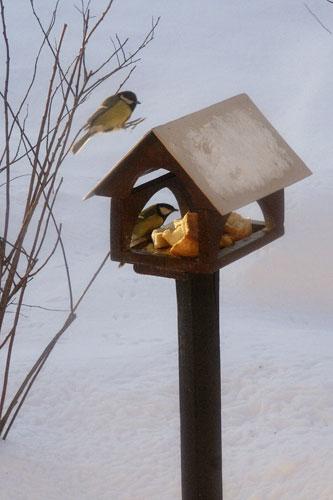синицы, кормушка для птиц