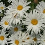 25 ноября 2012 года — День матери