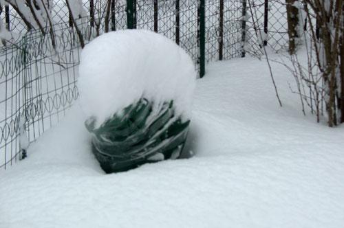 Зимние укрытия растений