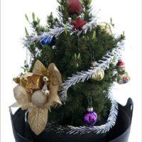 Как сохранить хвойные, подаренные к новогодним праздникам