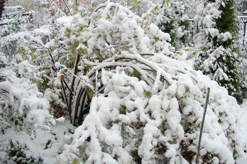 Бульденеж зимой