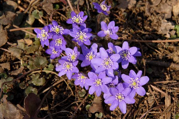 Цветы весны картинки с названием