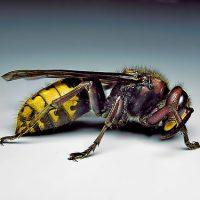 Что делать при укусах ядовитых змей и насекомых?