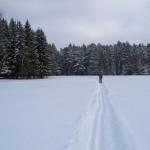 Как выбрать равнинные прогулочные лыжи