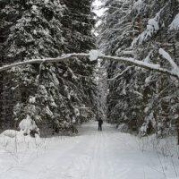 Лыжная мазь — советы по выбору и применению