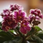 Растения и суеверия