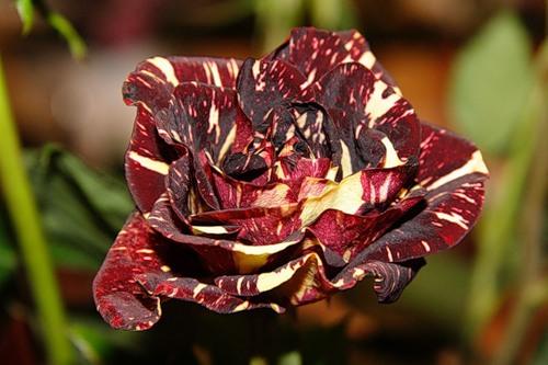 Какие цветы на похороны женщине и сколько