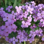 Создай свой «Сад запахов»