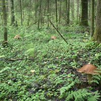 Съедобные грибы Подмосковья; где и когда их собирают
