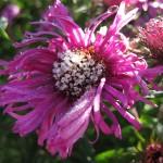 Осенний цветник, или цветение под занавес