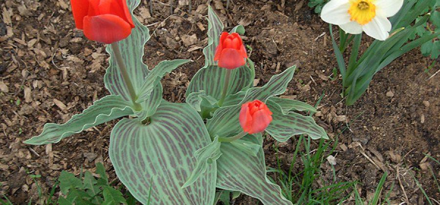 Просроченные луковицы и клубнелуковицы: посадить или выбросить?