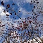 Боярышник как проверенное временем природное лекарство