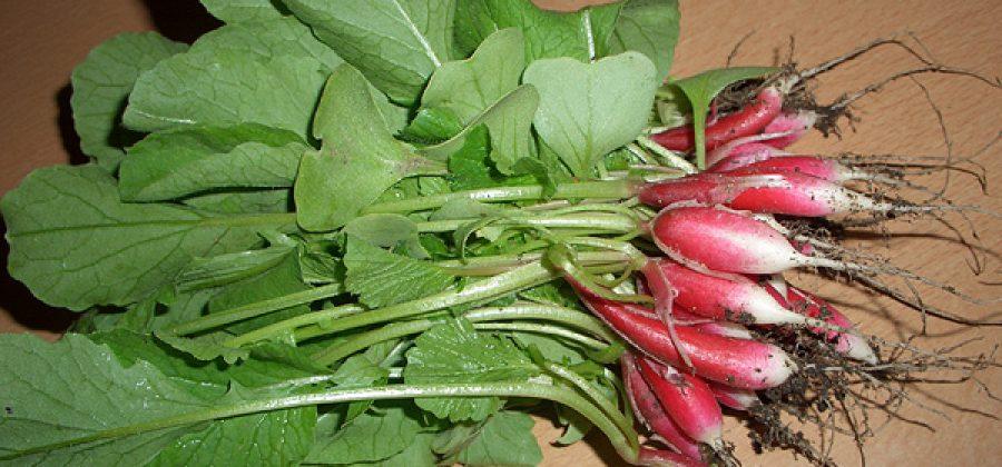 Нужны ли подзимние посевы семян цветов и овощей?