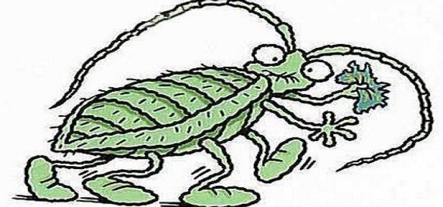 Куда пропали тараканы? Научные, бытовые и конспирологические версии