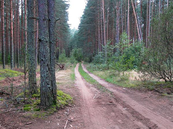 Лес, сфагнум