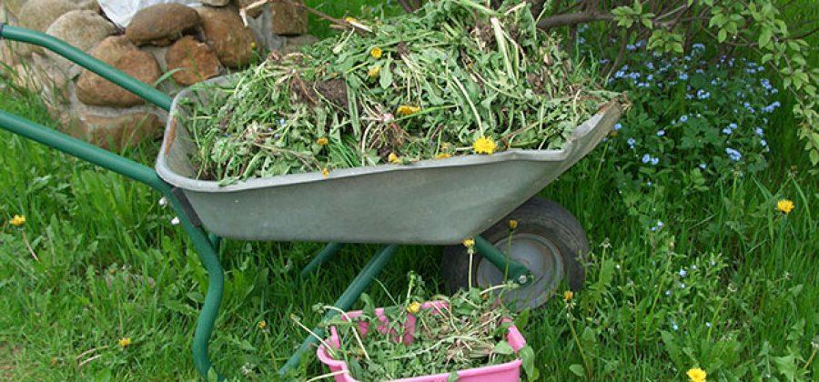 Борьба с сорняками всеми доступными способами
