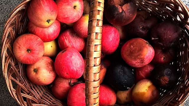 почерневшие при хранении яблоки