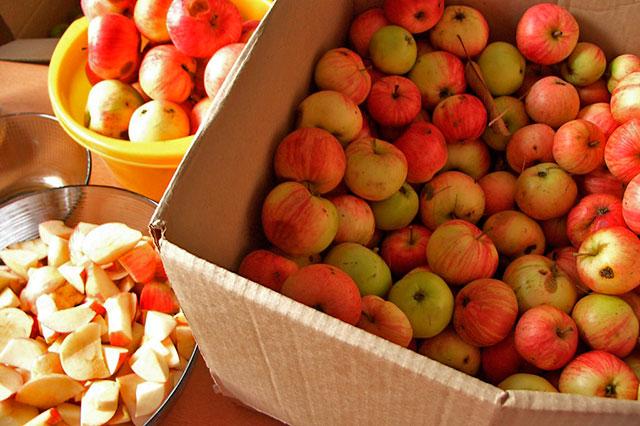 сортировка яблок