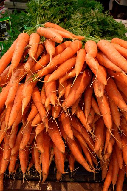 морковь, подзимние посевы овощей