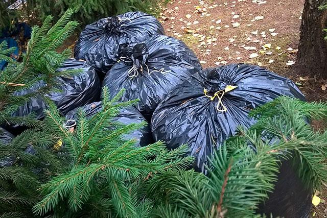 опавшие листья в мешках