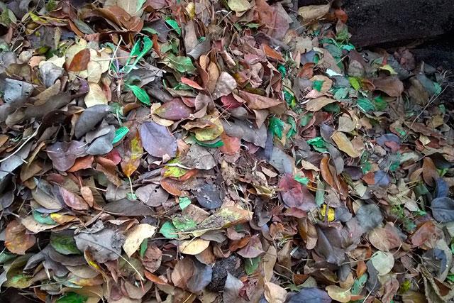 осенние листья в куче