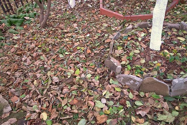 опавшая листва на земле
