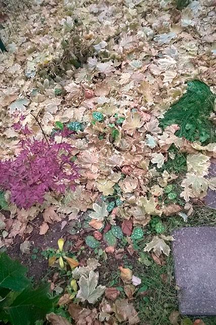 медуница под опавшими листьями