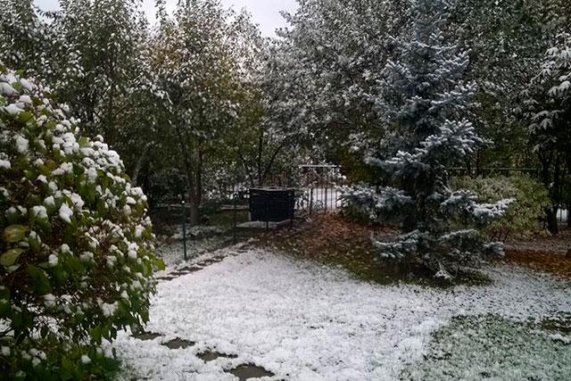 первый снег на участке