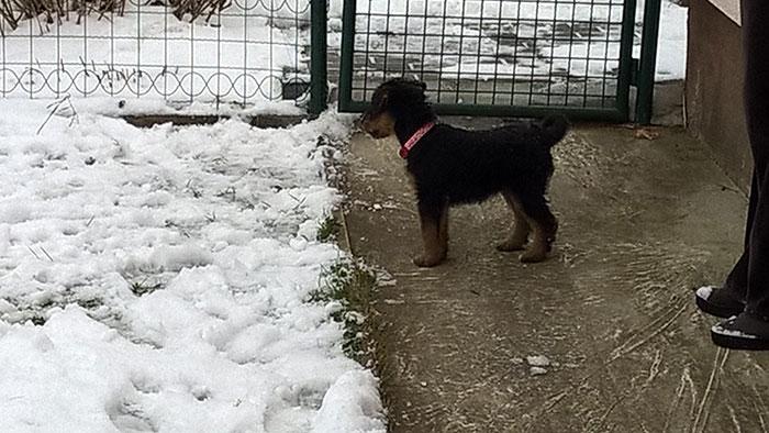 собака на участке: забор, ограждение участка, выгул собак на участке