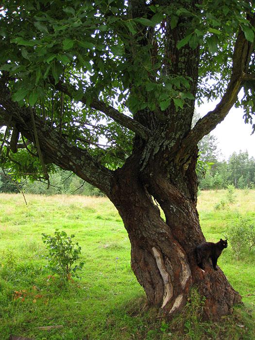 фото чёрного кота на дереве