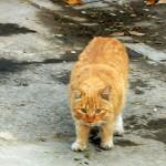 Выставки кошек в январе и феврале 2013 года