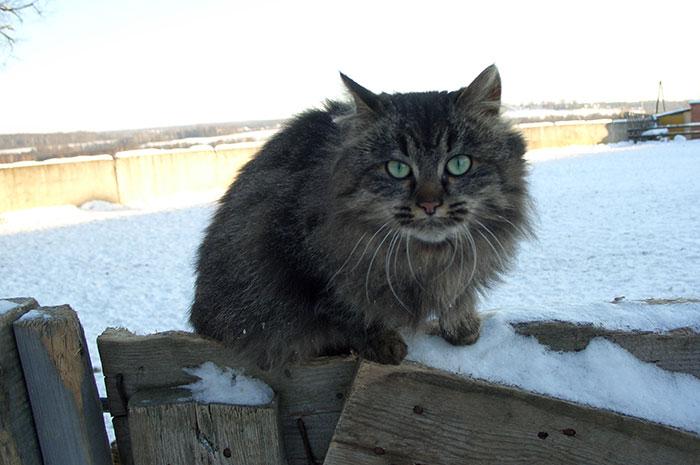 фото кошки: кошачьи глаза, кошка смотрит
