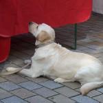 Выставки собак в марте 2013 года
