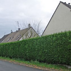 Интересные варианты живой изгороди для защиты и украшения участка
