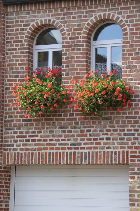 пеларгония в балконном ящике - украшение фасада дома, комнатная герань в балконном ящике