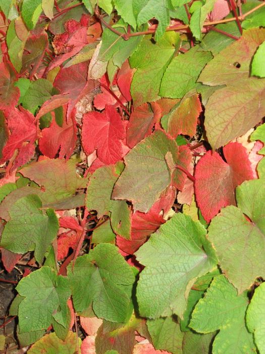 Как вернуть цвет листьям