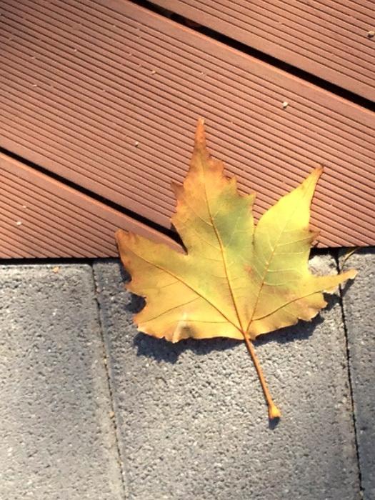 почему желтеют и опадают листья осенью, опавшие листья