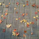 Почему осенью желтеют и опадают листья деревьев и кустарников?