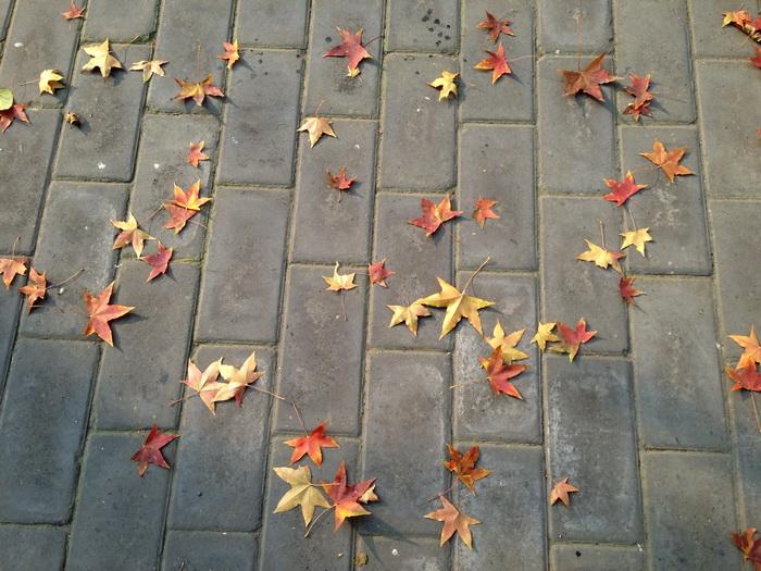 почему осенью листья желтеют и опадают, осенние листья, окраска осенних листьев