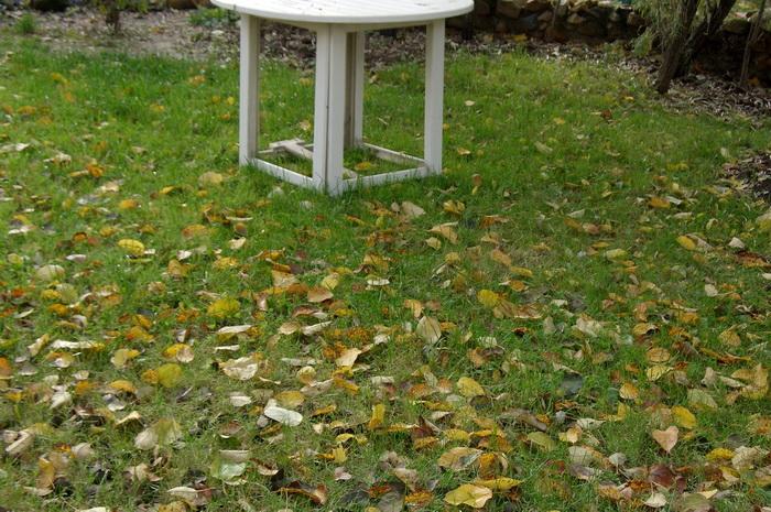 почему опадают листья осенью, опавшие листья плодовых деревьев, листопад в саду