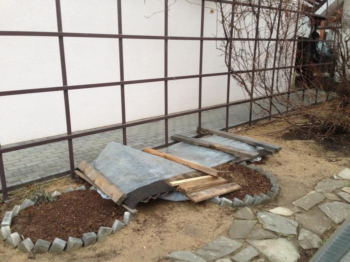 """укрытие на зиму винограда, подготовка к зиме саженца винограда сорта """"Альфа"""" и """"Хасанский"""", укрытие"""