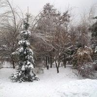 Приводим участок в порядок после ледяного дождя