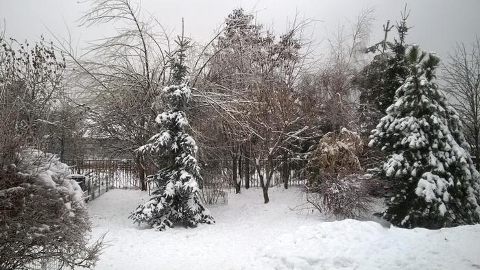 ледяной дождь, как помочь деревьям после ледяного дождя, участок после ледяного дождя