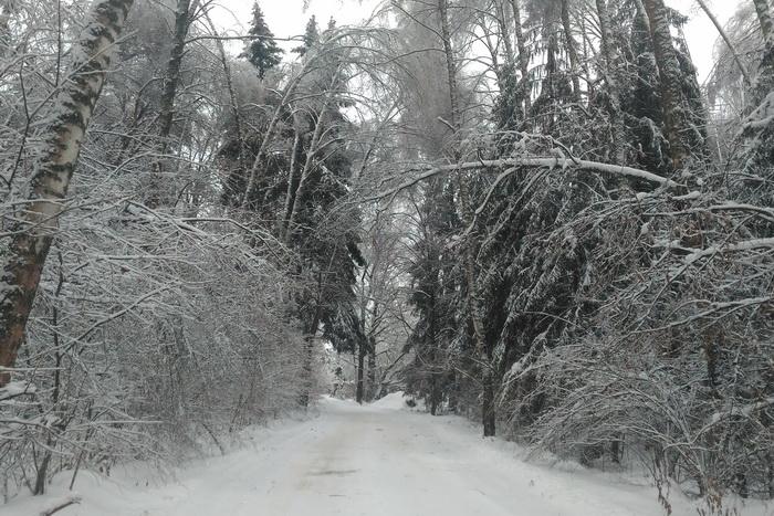 ледяной дождь, лес зимой после ледяного дождя