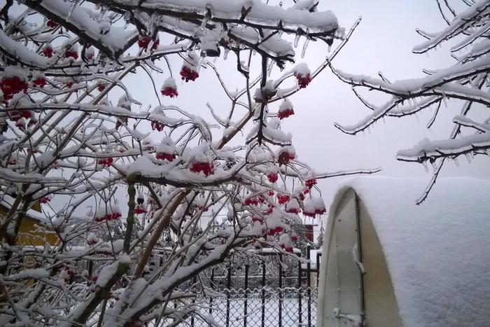 ледяной дождь, теплица с сотовым поликарбонатом зимой