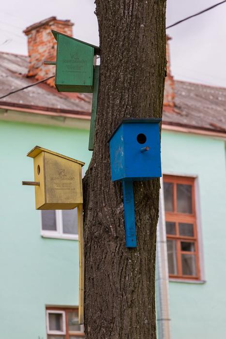 скворечники на дереве, правильные скворечники, покраска скворечника, как прикрепить скворечник на дерево