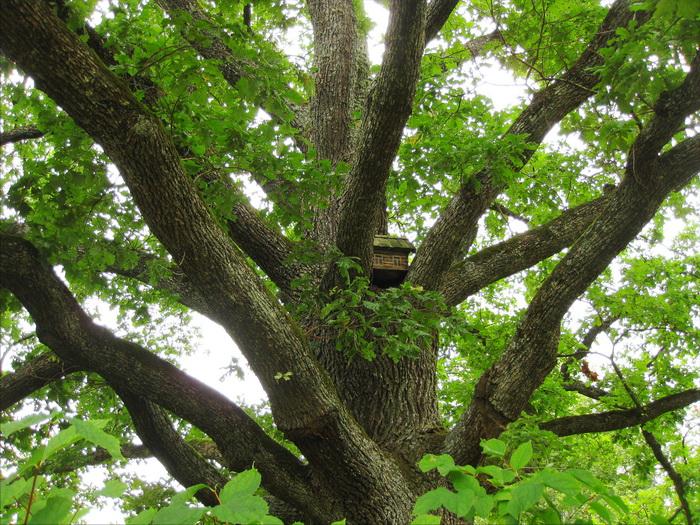 скворечник на дереве, домик для птиц, куда прикрепить скворечник